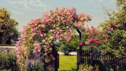 Poster Rose Garden