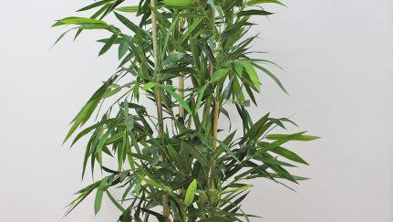 Bamboo Cana Natural, Vasos e Floreiras