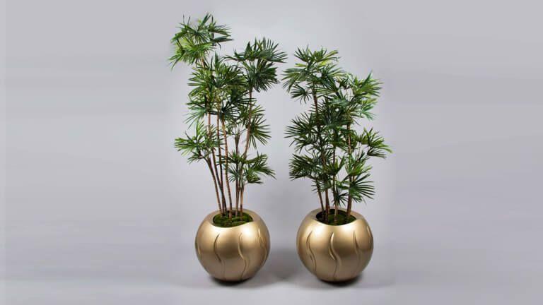 Baby Fan Palm, Vasos e Floreiras