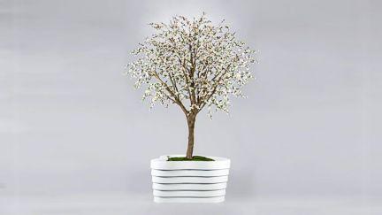 Cherry Blossom White