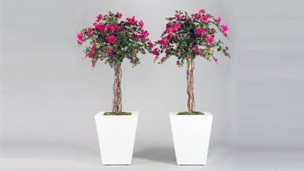 Bougainvillea Tree, Vasos e Floreiras