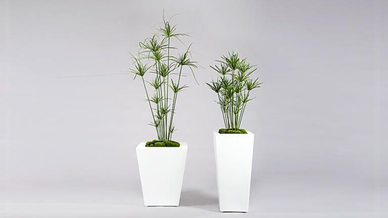 Cyperus Plant, Vasos e Floreiras
