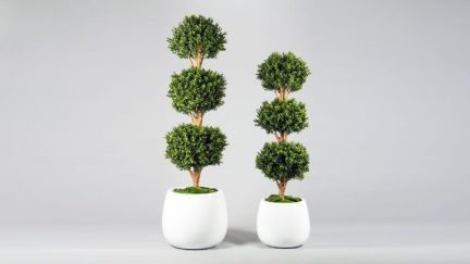 Boxwood Triple Ball Tree