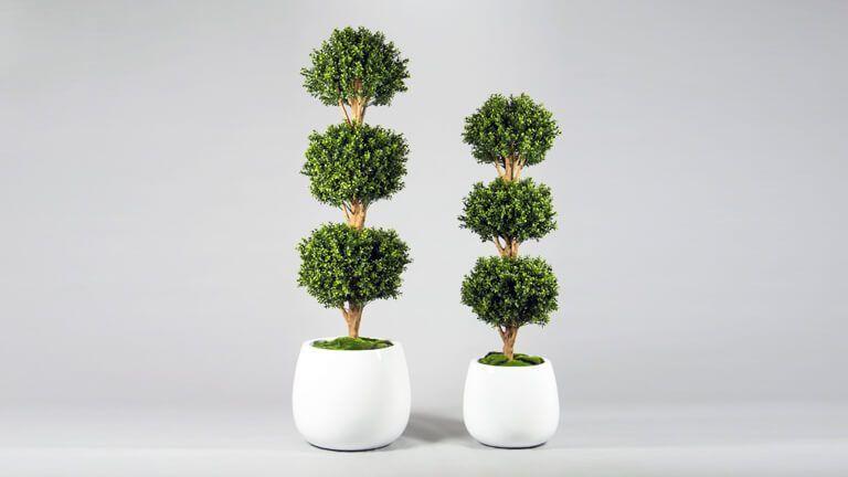 Boxwood Triple Ball Tree, Vasos e Floreiras