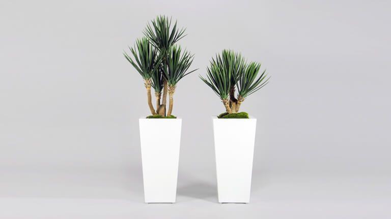 Baby Yucca, Vasos e Floreiras