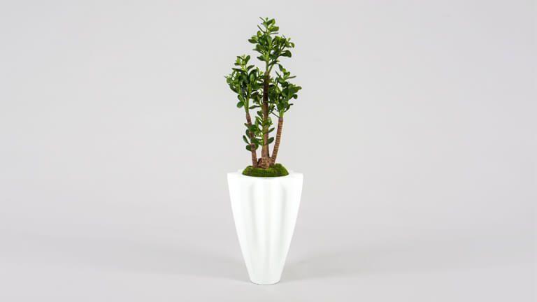 Money Tree, Vasos e Floreiras